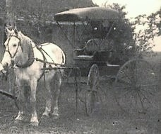 John A. Roberts white horse and black carriage